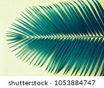 palm leaves isolated on yellow... | Shutterstock . vector #1053884747