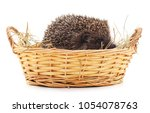 hedgehog in a basket isolated... | Shutterstock . vector #1054078763