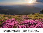 from the lawn covered with...   Shutterstock . vector #1054133957