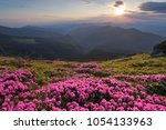 from the lawn covered with...   Shutterstock . vector #1054133963