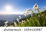 landscape with beautiful...   Shutterstock . vector #1054133987