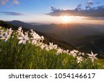 grass with daffodils. the...   Shutterstock . vector #1054146617