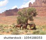 Three Saddled Horses Attached...