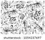 berry fruit  illustration... | Shutterstock . vector #1054237697