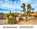 joshua tree  yucca brevifolia ... | Shutterstock . vector #1054352297