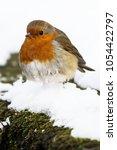 european robin  erithacus...   Shutterstock . vector #1054422797