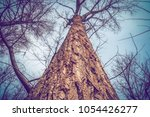 old big tree trunk  view from... | Shutterstock . vector #1054426277