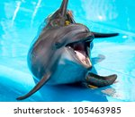 stock photo : Gay dolphin with mouth open on a blue background