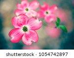 pink flowers background | Shutterstock . vector #1054742897