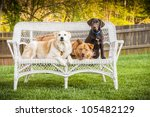 Dogs sitting outdoor and posing on wicker loveseat - stock photo