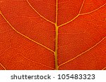 natural background texture of... | Shutterstock . vector #105483323