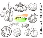 hand drawn tomatoes set... | Shutterstock .eps vector #1054838627