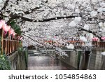 cherry blossom. sakura full...   Shutterstock . vector #1054854863