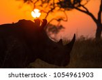 a large bull white rhino at... | Shutterstock . vector #1054961903