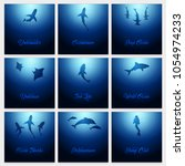 set of underwater backgrounds... | Shutterstock .eps vector #1054974233