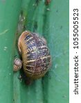 Small photo of Snail and baby snail on a church door
