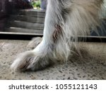 Small photo of Closeup the dog leg with wet wounds for licking lick,it show the disease from itch and allergy