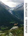 Small photo of A alpine ibex and glacier in Chamonix,France.