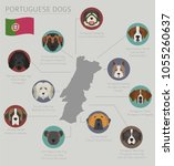 dogs by country of origin.... | Shutterstock .eps vector #1055260637