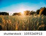 summer sun shining over... | Shutterstock . vector #1055260913