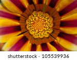 colourful gaenia abstract detail - stock photo