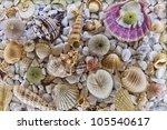 seashell | Shutterstock . vector #105540617