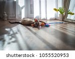 Stock photo the cat lies on the floor and plays with a toy 1055520953