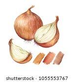 onion. hand drawn watercolor... | Shutterstock . vector #1055553767