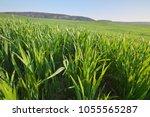 sunrise in grean meadow of...   Shutterstock . vector #1055565287