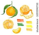 watercolor illustration of... | Shutterstock . vector #1055590733