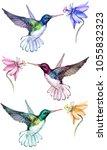 beautiful colorful hummingbirds ... | Shutterstock . vector #1055832323
