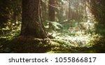 forest bokeh background. summer ...   Shutterstock . vector #1055866817