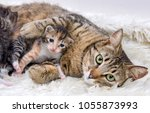 Stock photo mom cat mother cat and baby cat kitten 1055873993