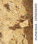 Small photo of desert animal on Negev, Israel