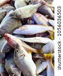 Small photo of Fresh fish in the seafood market in abundance in Thailand.