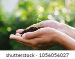 trees growing seedlings in... | Shutterstock . vector #1056056027