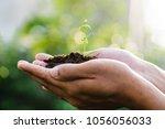 trees growing seedlings in... | Shutterstock . vector #1056056033