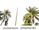 coconut palm tree isolated | Shutterstock . vector #1056056783