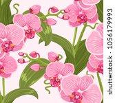 Pink Purple Tender Orchid...