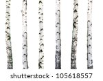 Natural Background   Birch  ...