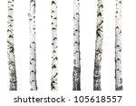 Natural Background   Birch  ...