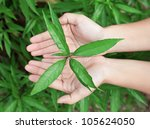 Leaf in hands over the grass - stock photo