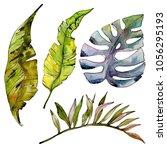 tropical hawaii leaves tree in... | Shutterstock . vector #1056295193