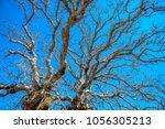 beautiful landscape around... | Shutterstock . vector #1056305213