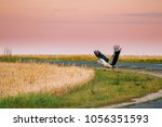 adult european white stork... | Shutterstock . vector #1056351593