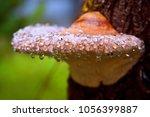 Mushroom On The Tree And Drops...
