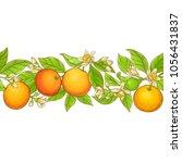 grapefruit branch vector pattern   Shutterstock .eps vector #1056431837