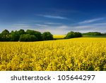 Yellow Oilseed Rape Field Unde...