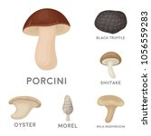 poisonous and edible mushroom... | Shutterstock .eps vector #1056559283