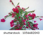 pink flowers of a tropical... | Shutterstock . vector #1056682043